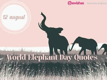 World Elephant Day: Top Quotes and Sayings
