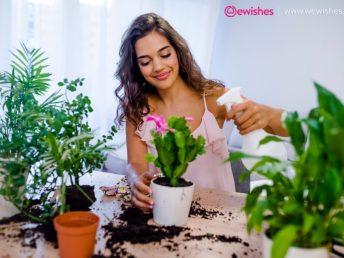 Winter Gardening Ideas
